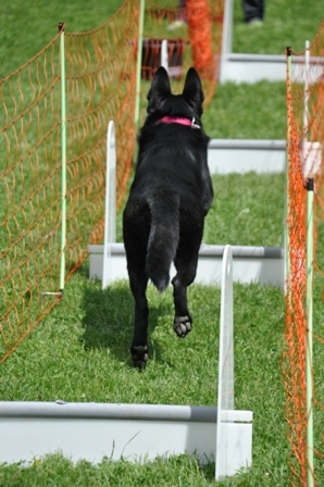 Flyball_4
