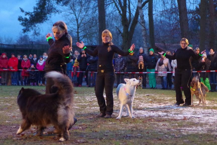 DogDancer_Klein-Auheim.jpg