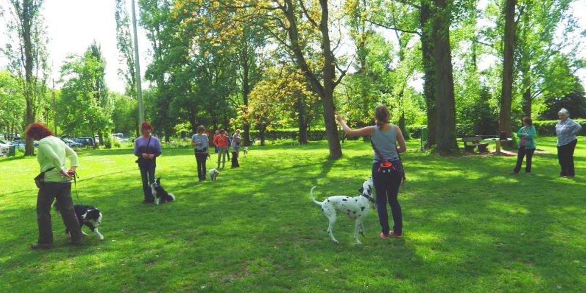 Basisausbildung SSGH Bockenheim Hundeausbildung Hundetrainer Hundesport