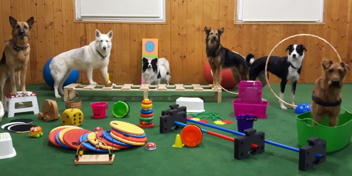 Clickern SSGH Bockenheim Hundeausbildung Hundetrainer Hundesport