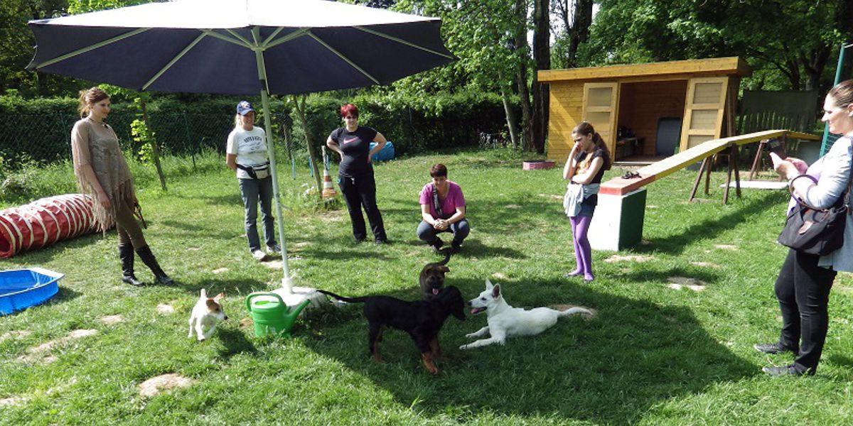 Welpenstunde SSGH Bockenheim Hundeausbildung Hundetrainer Hundesport