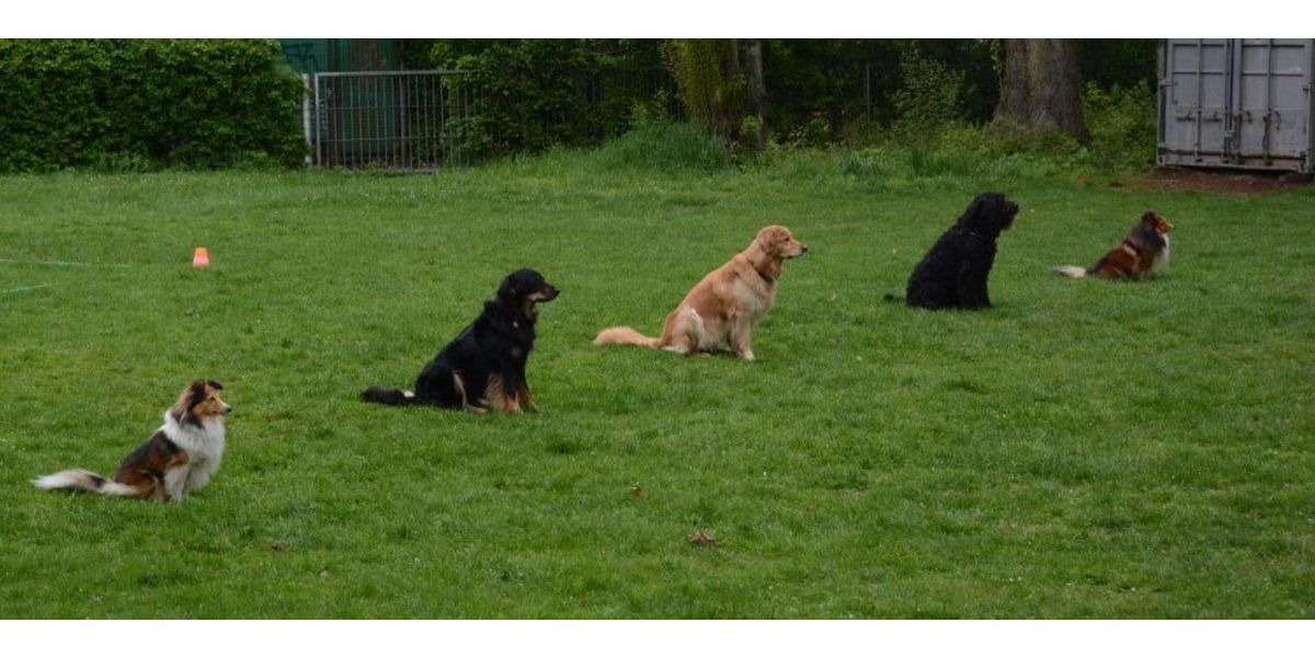 Gruppenübung-Klasse SSGH Bockenheim Hundeausbildung Hundetrainer Hundesport