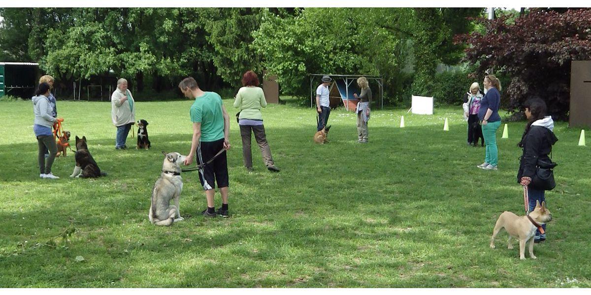 Junghundestunde SSGH Bockenheim Hundeausbildung Hundetrainer Hundesport