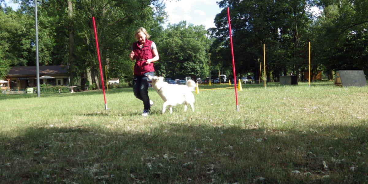 THS SSGH Bockenheim Hundeausbildung Hundetrainer Hundesport